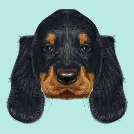 setter: Illustrated Portrait of Gordon Setter dog. Cute black curly face of domestic puppy on blue background.