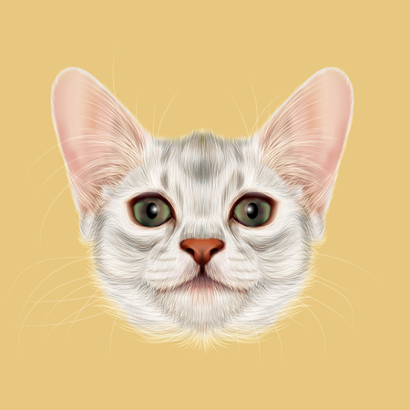 somali: Illustrated portrait of Somali kitten. Cute fluffy face of domestic cat on yellow background. Stock Photo