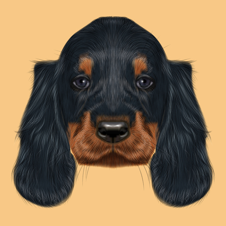 setter: Illustrated Portrait of Gordon Setter dog. Cute black curly face of domestic puppy on yellow background.