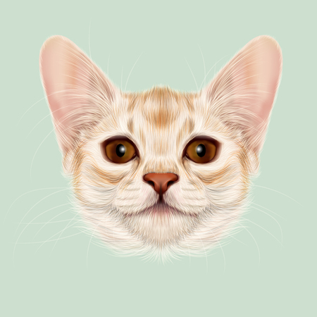 somali: Illustrated portrait of Somali kitten. Cute fluffy face of domestic cat on green background. Stock Photo