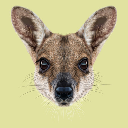 wallaby: Illustrated Portrait of Wallaby. Cute face of wild Australian mammal Wallaby on yellow background.
