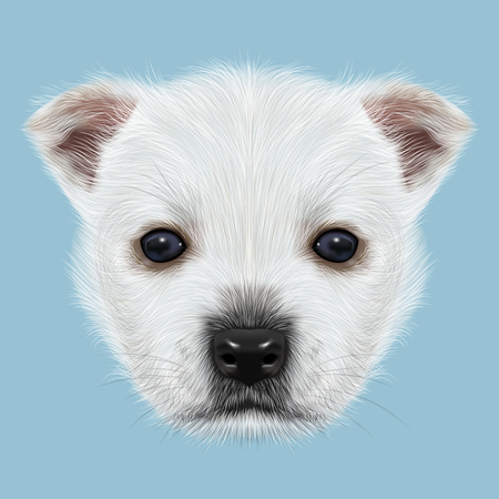 highland: Illustrated Portrait of West Highland White Terrier. Cute white fluffy face of puppy on blue background.