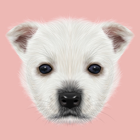 highland: Illustrated Portrait of West Highland White Terrier. Cute white fluffy face of puppy on pink background. Stock Photo