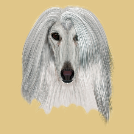 hound: Illustrated Portrait of Afghan Hound dog. Beautiful silver coat face of domestic dog on beige background.