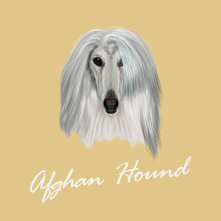 Vector Illustrated Portrait of Afghan Hound dog. Beautiful silver coat face of domestic dog on beige background. Illustration