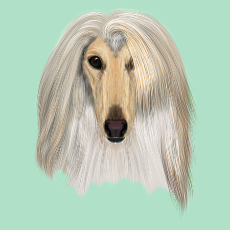 Illustrated Portrait of Afghan Hound dog. Beautiful golden coat face of domestic dog on blue background.