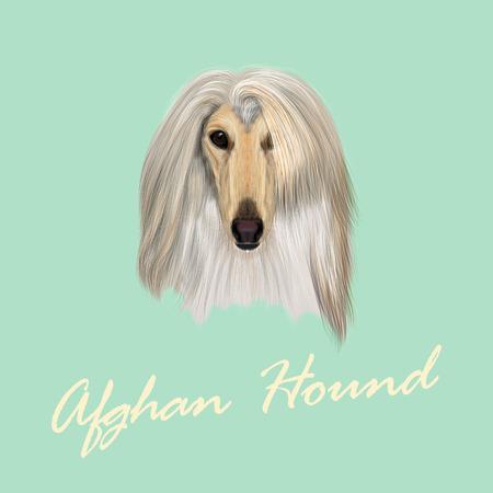 Vector Illustrated Portrait of Afghan Hound dog. Beautiful golden coat face of domestic dog on blue background. Illustration