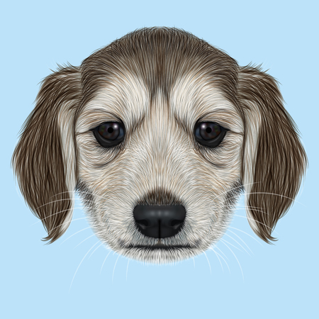 afghan: Illustrated Portrait of Afghan Hound puppy. Cute dark coat face of domestic dog on blue background.