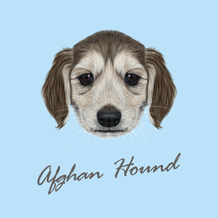 Vector Illustrated Portrait of Afghan Hound puppy. Cute dark coat face of domestic dog on blue background. Illustration