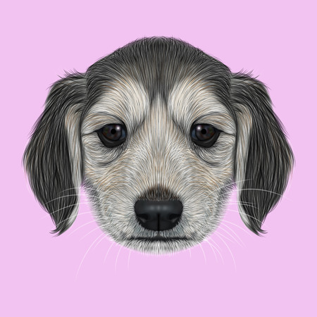 hound: Illustrated Portrait of Afghan Hound puppy. Cute dark coat face of domestic dog on pink background. Stock Photo