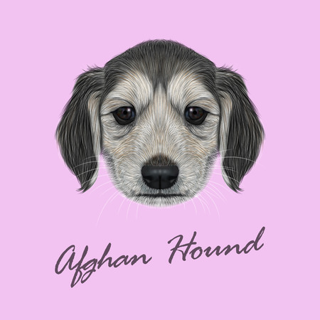 afghan: Vector Illustrated Portrait of Afghan Hound puppy. Cute dark coat face of domestic dog on pink background.