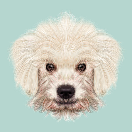 corded: Illustrated Portrait of Komondor puppy. Cute white fluffy face of domestic dog on blue background.
