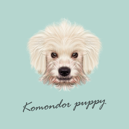 Vector Illustrated Portrait of Komondor puppy. Cute white fluffy face of domestic dog on blue background. Ilustração