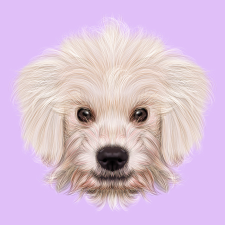 Illustrated Portrait of Komondor puppy. Cute white fluffy face of domestic dog on violet background.