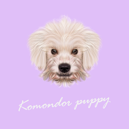 Vector Illustrated Portrait of Komondor puppy. Cute white fluffy face of domestic dog on violet background.