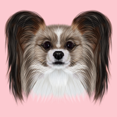 continental: Illustrated Portrait of Papillon dog. Cute fluffy face of Continental Toy Spaniel dog on pink background.