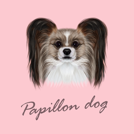 continental: Vector Illustrated Portrait of Papillon dog. Cute fluffy face of Continental Toy Spaniel dog on pink background.