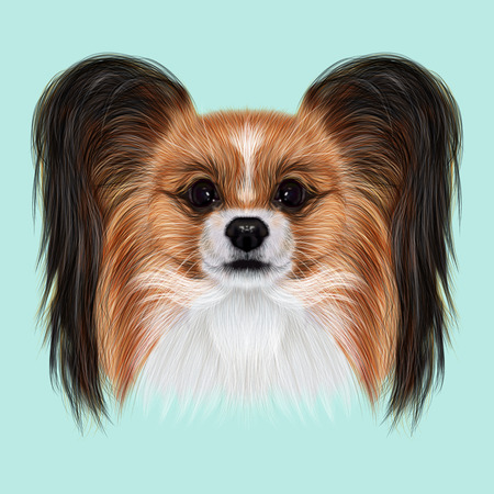 continental: Illustrated Portrait of Papillon dog. Cute fluffy face of Continental Toy Spaniel dog on blue background.