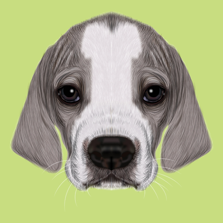 cite: Illustrated Portrait of English Pointer puppy. Cite bicolor short hair domestic dog on green background.