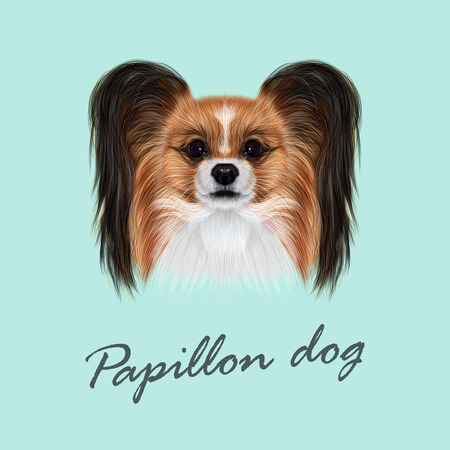 continental: Vector Illustrated Portrait of Papillon dog. Cute fluffy face of Continental Toy Spaniel dog on blue background. Illustration