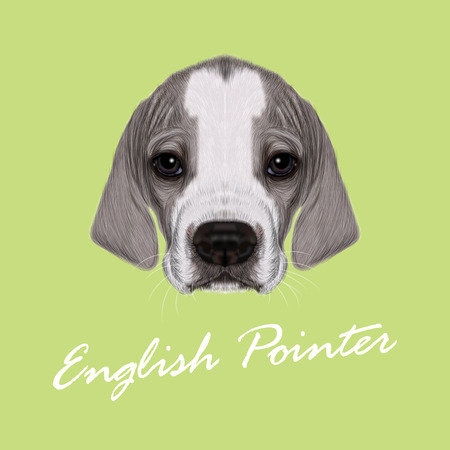 setter: Vector Illustrated Portrait of English Pointer puppy. Cute bicolor short hair domestic dog on green background.
