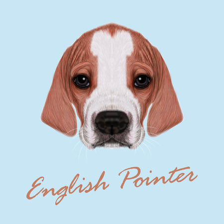short hair dog: Vector Illustrated Portrait of English Pointer puppy. Cute bicolor short hair domestic dog on blue background.