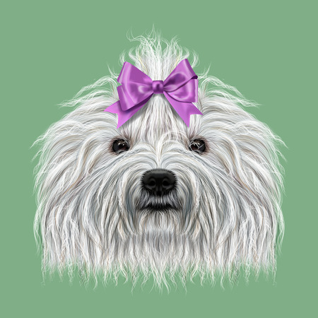 corded: Illustrated Portrait of Puli dog. Cute curly white face of domestic dog on green background.