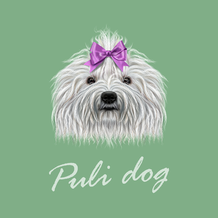 corded: Vector Illustrated Portrait of Puli dog. Cute curly white face of domestic dog on green background.