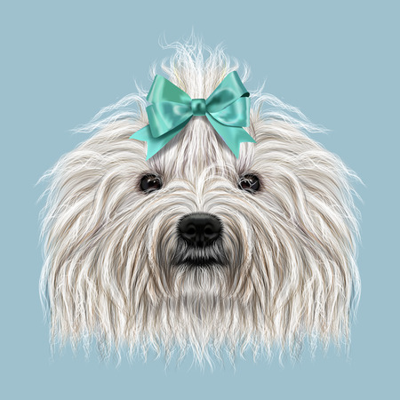 corded: Illustrated Portrait of Puli dog. Cute curly white face of domestic dog on blue background.