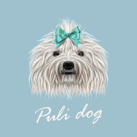corded: Vector Illustrated Portrait of Puli dog. Cute curly white face of domestic dog on blue background. Illustration