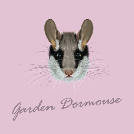 dormouse: Vector Illustrated Portrait of Garden dormouse. Cute face of fluffy Garden dormouse on pink background.
