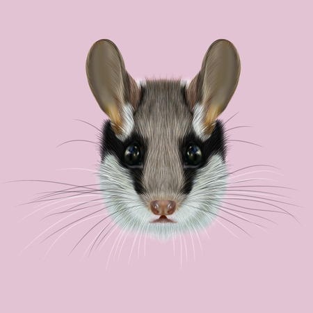 Illustrated Portrait of Garden dormouse. Cute face of fluffy Garden dormouse on pink background.