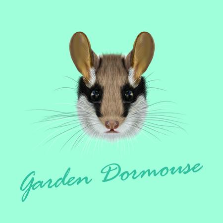 Vector Illustrated Portrait of Garden dormouse. Cute face of fluffy Garden dormouse on green background.