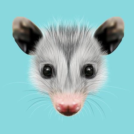 opossum: Illustrated Portrait of Opossum. Cute fluffy face of Opossum on blue background.