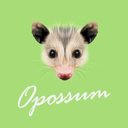 possum: Vector Illustrated Portrait of Opossum. Cute fluffy face of Opossum on green background. Illustration