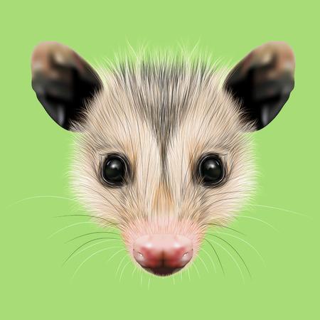 opossum: Illustrated Portrait of Opossum. Cute fluffy face of Opossum on green background.