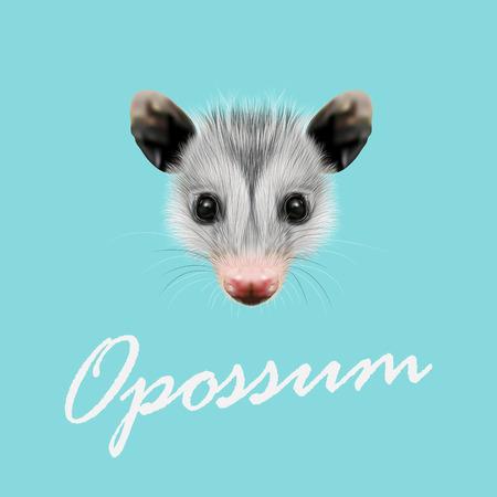 opossum: Vector Illustrated Portrait of Opossum. Cute fluffy face of Opossum on blue background.