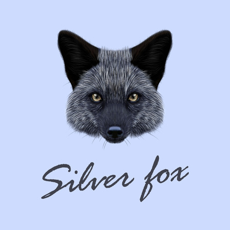 silver fox: Vector Illustrated Portrait of Silver fox. Cute back face of fox on blue background. Illustration