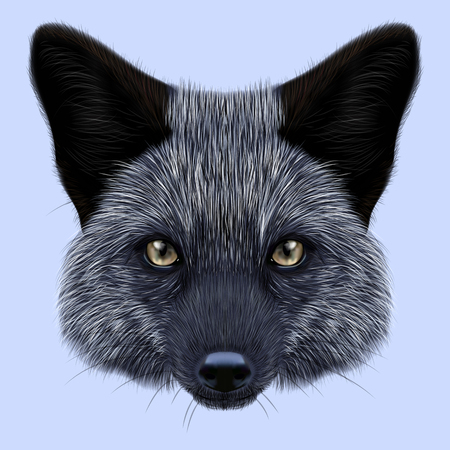 Illustrated Portrait of Silver fox. Cute back face of fox on blue background.