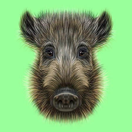 野生のイノシシのイラスト。緑の背景に野生の豚の素晴らしい顔。