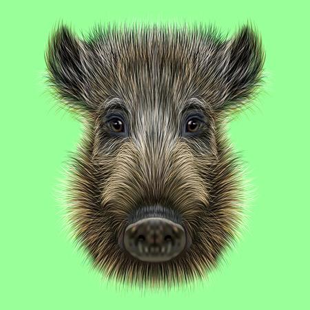 멧돼지의 삽화. 녹색 배경에 야생 돼지의 가마우르는 얼굴입니다. 스톡 콘텐츠