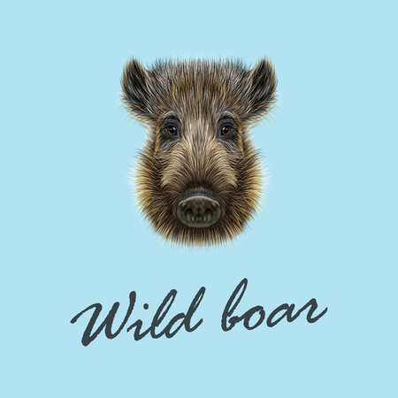 Vector Illustrated of Wild boar. Formidable face of wild pig on blue background.  イラスト・ベクター素材