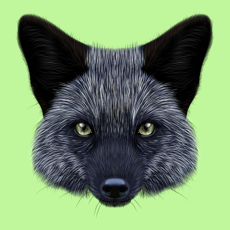 silver fox: Illustrated Portrait of Silver fox. Cute back face of fox on green background. Stock Photo