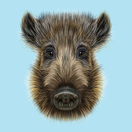 Illustrated of Wild boar. Formidable face of wild pig on blue background. Stock Photo