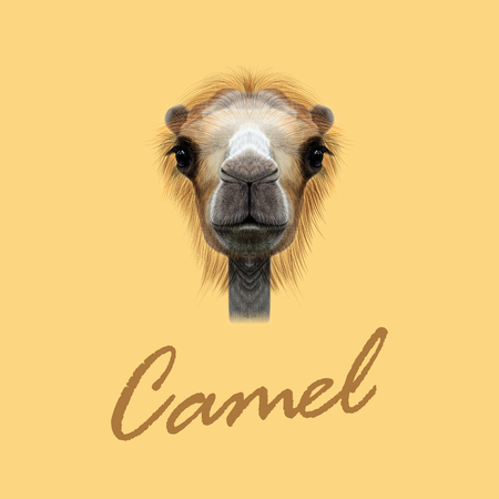 humped: Vector Illustrated Portrait of Camel. Cute face of Camel on yellow background. Illustration