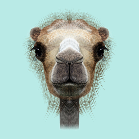 humped: Illustrated Portrait of Camel. Cute face of Camel on blue background. Stock Photo