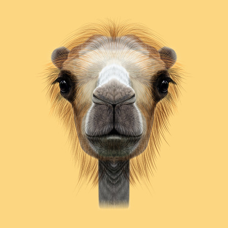 humped: Illustrated Portrait of Camel. Cute face of Camel on yellow background.