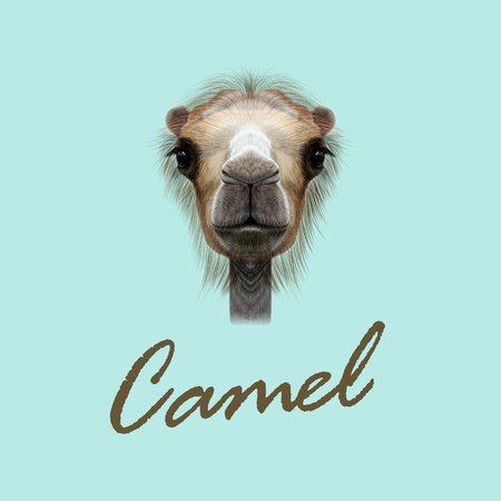 humped: Vector Illustrated Portrait of Camel. Cute face of Camel on blue background.