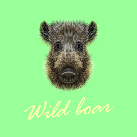 formidable: Vector Illustrated of Wild boar. Formidable face of wild pig on green background.