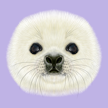 pup: Illustrated Portrait of Harp Seal Pup. Cute fluffy face of Harp Seal baby on violet background. Stock Photo